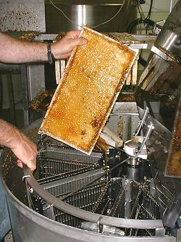 placing a honey frame in the centrifuge