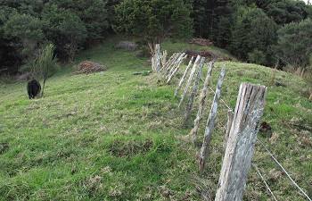 the fence at the top of the Frog and Camp paddocks