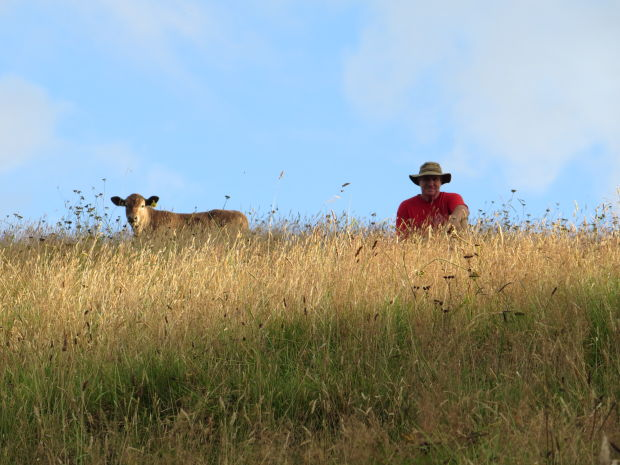calf and man on hill