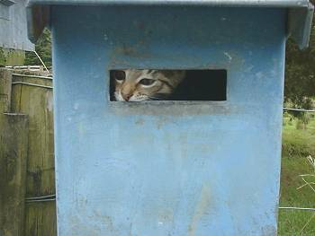 Spice in the mail-box