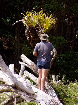Stephan watering an epiphyte