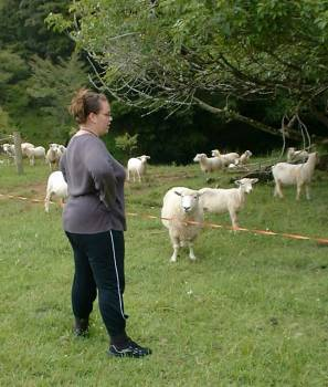Kursty converses with sheep
