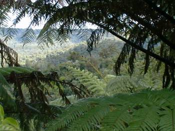 looking through the ferns and across the hills of the Maungataniwha Range
